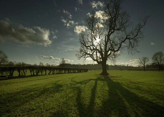 Tree Greeting Card featuring the photograph The Lonely Tree by Angel Ciesniarska