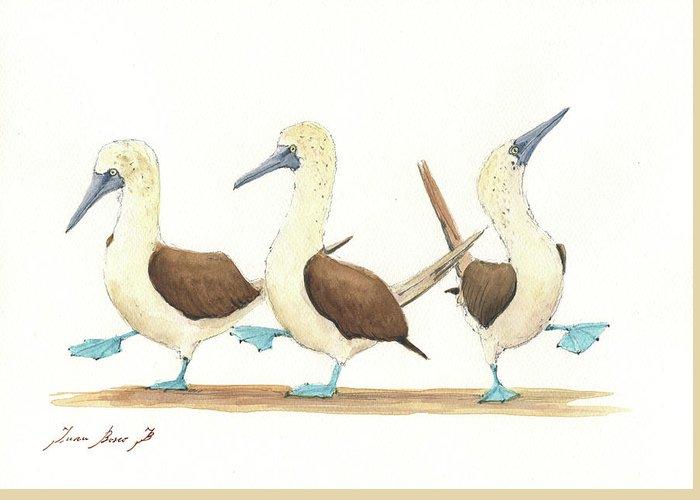 Galapagos Greeting Cards