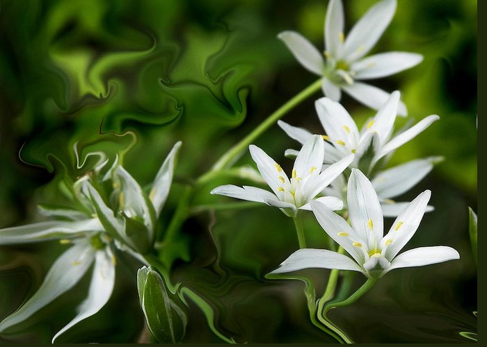 Flowers Greeting Card featuring the photograph Tiny Whites Swirl by Jim Darnall