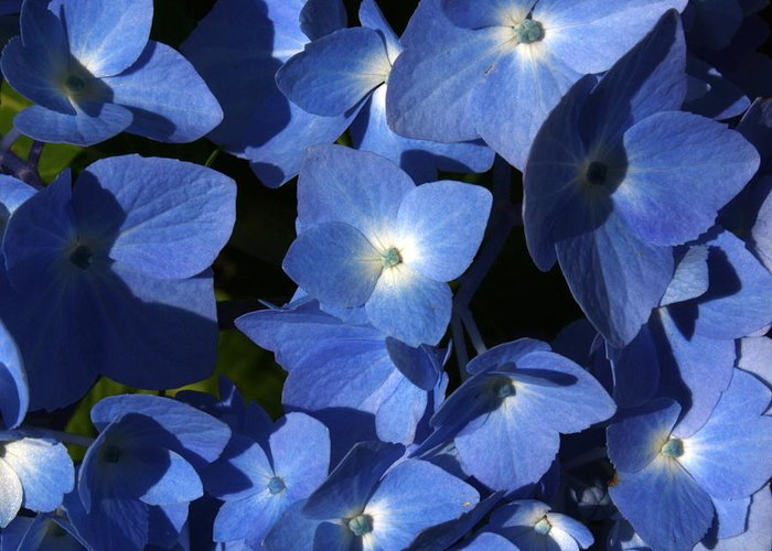 Blue Greeting Card featuring the photograph True Blue by Annie Babineau