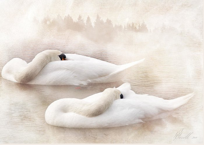 Swan Greeting Card featuring the photograph Two Swans by Svetlana Sewell