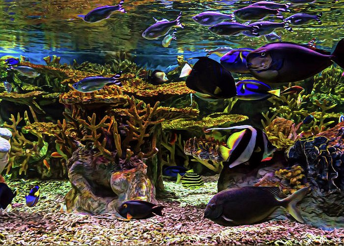 Aquarium Greeting Card featuring the photograph Under The Sea by Janet Fikar