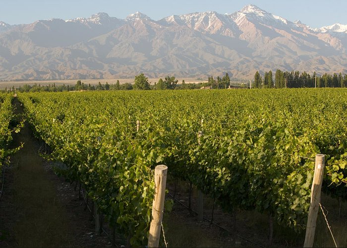Argentina Greeting Card featuring the photograph Vineyards In The Mendoza Valley by Michael S. Lewis