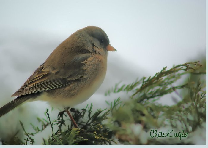 Bird Greeting Card featuring the photograph Weathering The Storm by Chuck Kugler