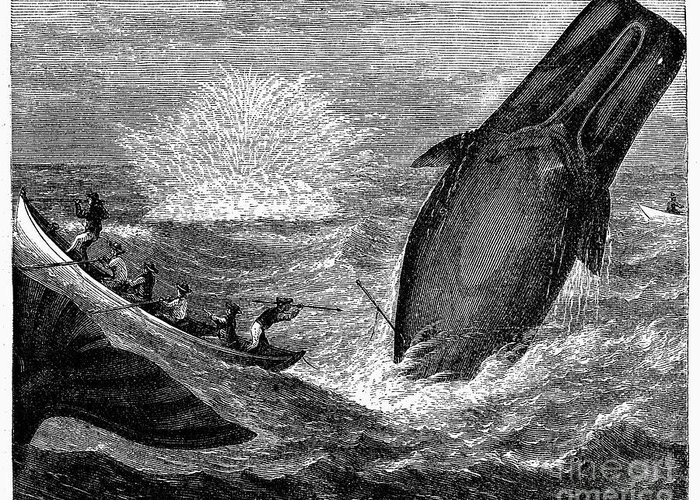 19th Century Greeting Card featuring the photograph Whaling, 19th Century by Granger
