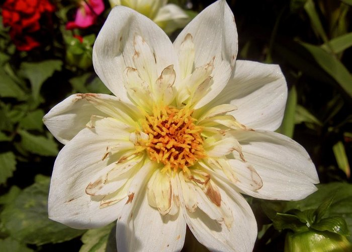 Flower Greeting Card featuring the photograph White Flower by Stephanie Moore
