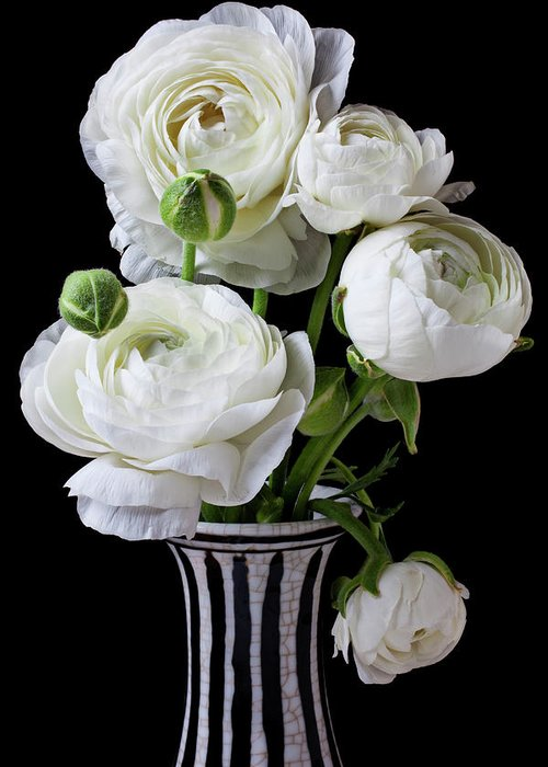 White Ranunculus Flower Vase Floral Greeting Card featuring the photograph White Ranunculus In Black And White Vase by Garry Gay