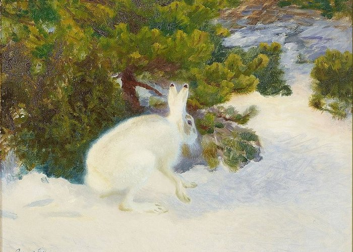 Bruno Liljefors 1860-1939 Winter Hare Greeting Card featuring the digital art Winter Hare by Mark Carlson