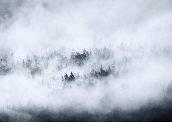 Fog Greeting Card featuring the photograph Winter Dawning by Mike Dawson