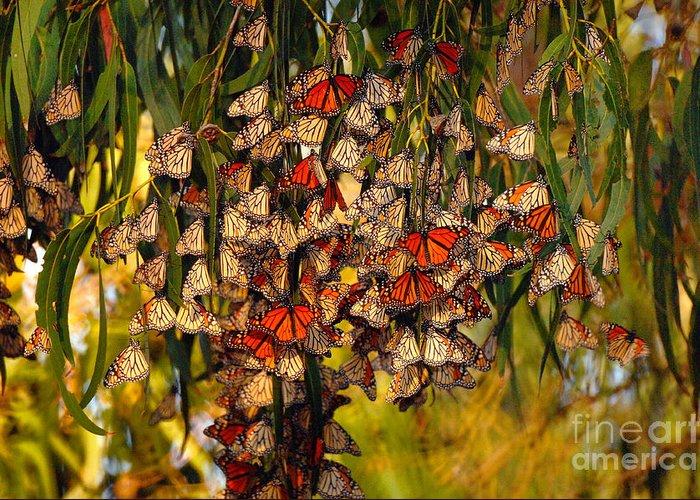 Butterflies Greeting Card featuring the photograph Butterflies by Marc Bittan