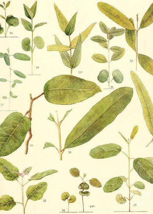 Botanical Greeting Card featuring the digital art Vintage Botanical Illustration by Alexandr Testudo