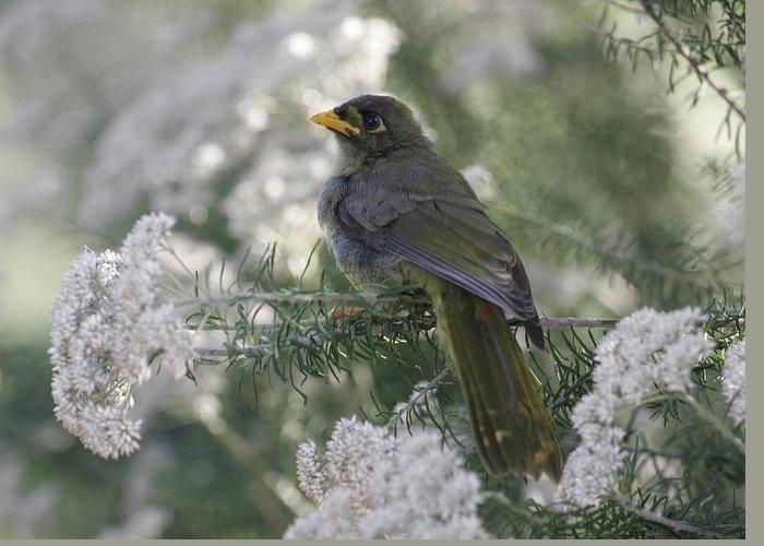 Bellbird Greeting Card featuring the photograph Bellbird by Masami Iida
