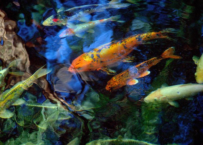 Koi Greeting Card featuring the photograph The Koi Pond by Marc Bittan
