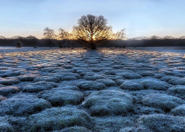 Balmer Lawn Greeting Card featuring the photograph New Forest - England by Joana Kruse