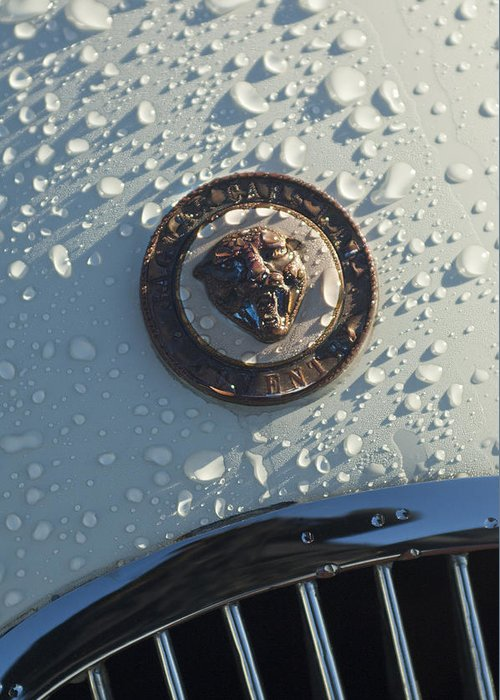 1954 Jaguar Xk120 Roadster Greeting Card featuring the photograph 1954 Jaguar Xk120 Roadster Hood Emblem by Jill Reger