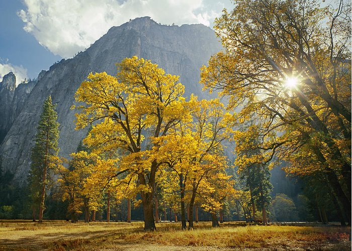 Oak Trees Greeting Card featuring the photograph 1m6611-oak Trees And Middle Cathedral Rock In Autumn by Ed Cooper Photography