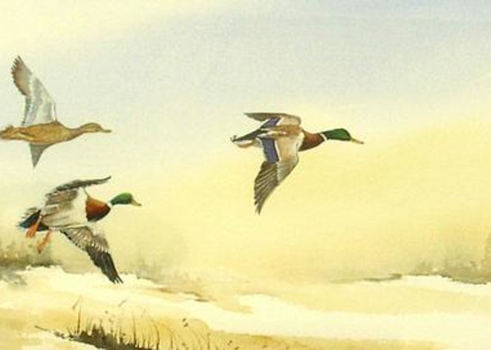 Mallard Ducks Greeting Card featuring the painting Flying Over by Lynne Parker