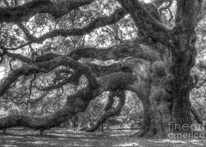 Angel Oak Greeting Card featuring the photograph Angel Oak Tree Charleston Sc by Dustin K Ryan
