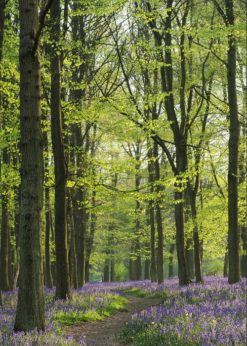Bluebell Greeting Card featuring the photograph Bluebell Wood by Liz Pinchen
