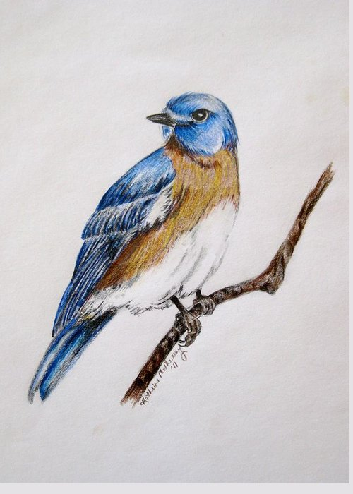 Bluebird Greeting Card featuring the drawing Bluebird Guardian by Kathrine McMurray