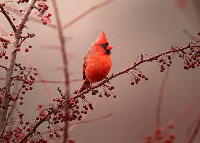 Cardinal Birds Greeting Cards