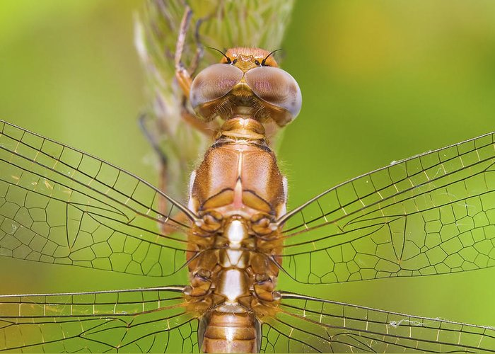 Dragonfly Greeting Card featuring the photograph Dragonfly by Andre Goncalves