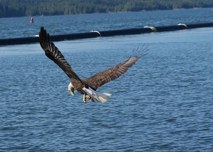 Eagles Greeting Card featuring the photograph Flying Eagle. by Robert Rodda