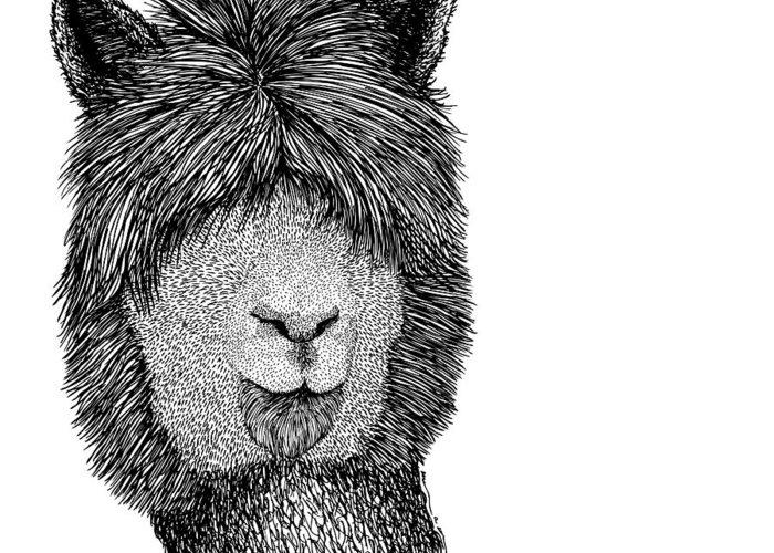 Llama Drawings Greeting Cards