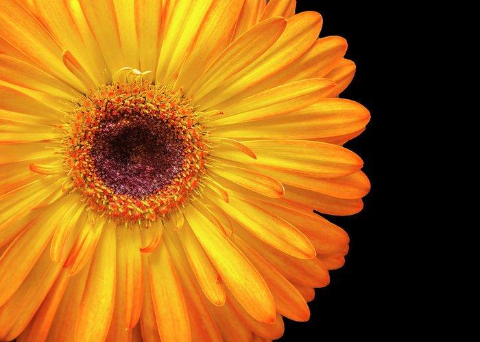 Flower Greeting Card featuring the photograph Macro Shot Of Flower by Karen Neimeier