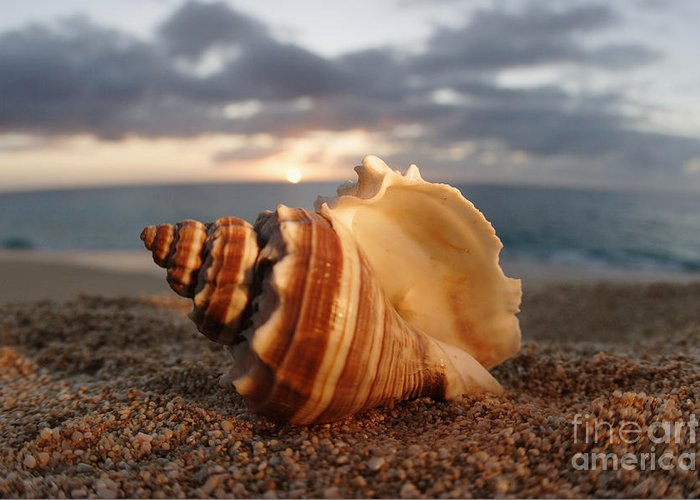 Background Greeting Card featuring the photograph North Shore Seashell by Vince Cavataio - Printscapes