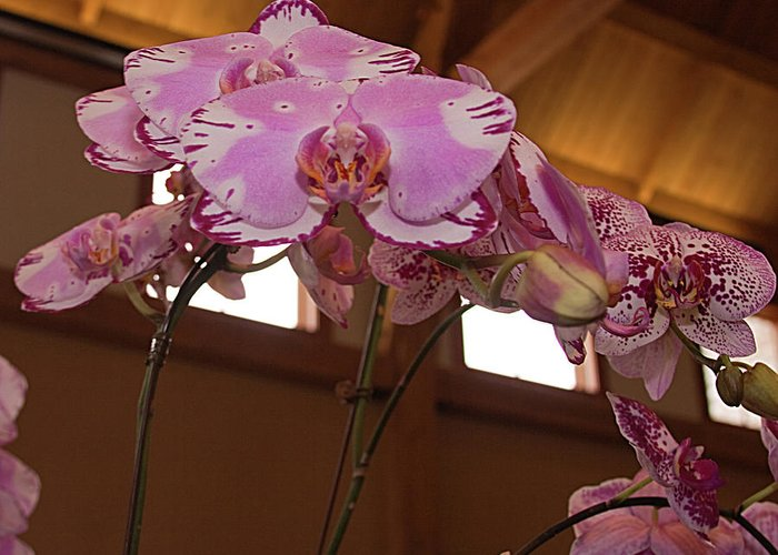 Orchid Greeting Card featuring the photograph Orchid by Laurie Prentice
