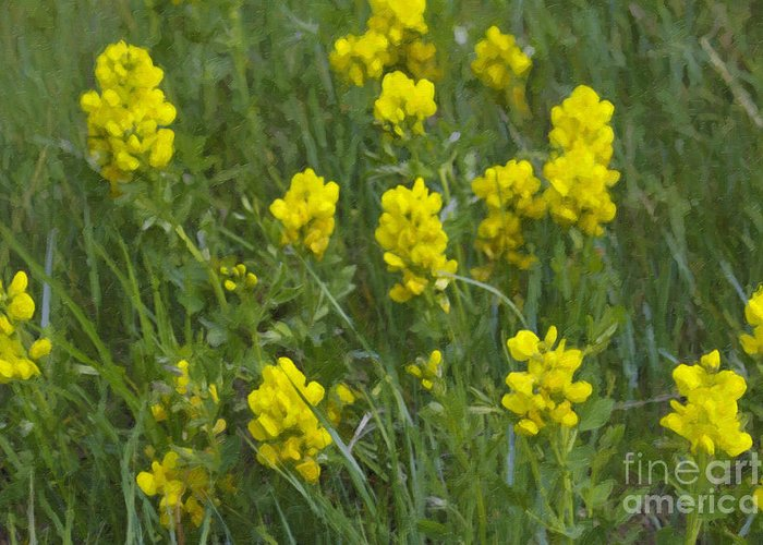 Yellow Floral Greeting Card featuring the photograph Panorama Hills Bluffs by Donna Munro
