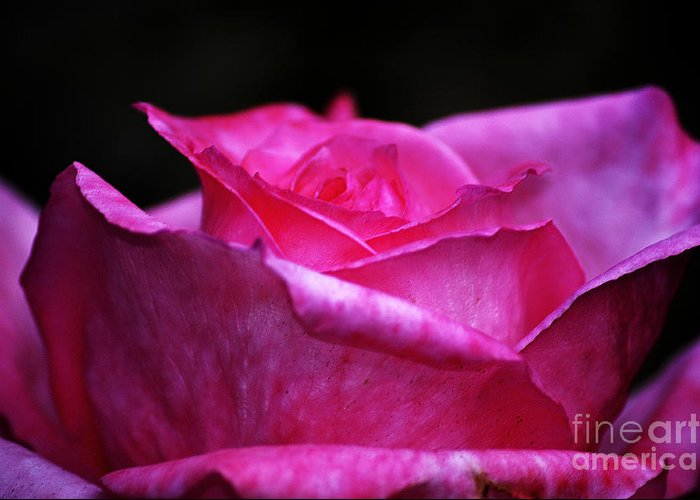 Clay Greeting Card featuring the photograph Pink Rose by Clayton Bruster