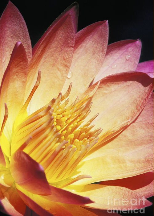 Abstract Greeting Card featuring the photograph Pink Water Lily by Bill Brennan - Printscapes