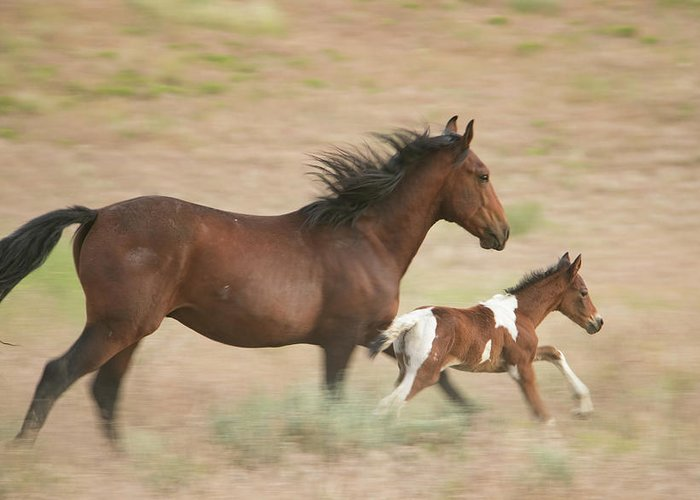 Horse Greeting Card featuring the photograph Running Free by Kent Keller