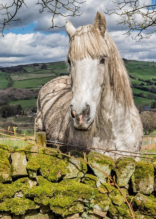 Birds & Animals Greeting Card featuring the photograph Rustic Horse by Nick Bywater