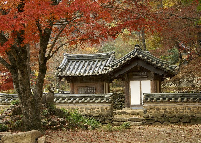 Korea Greeting Card featuring the photograph Seonamsa In Autumn by Michele Burgess