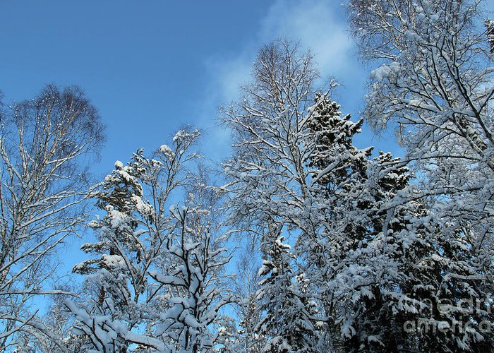 Trees Greeting Card featuring the photograph Snowy Trees Against A Blue Sky by Kerstin Ivarsson