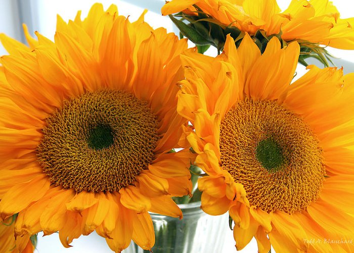 Sunflowers Greeting Card featuring the photograph Sunflowers by Todd Blanchard