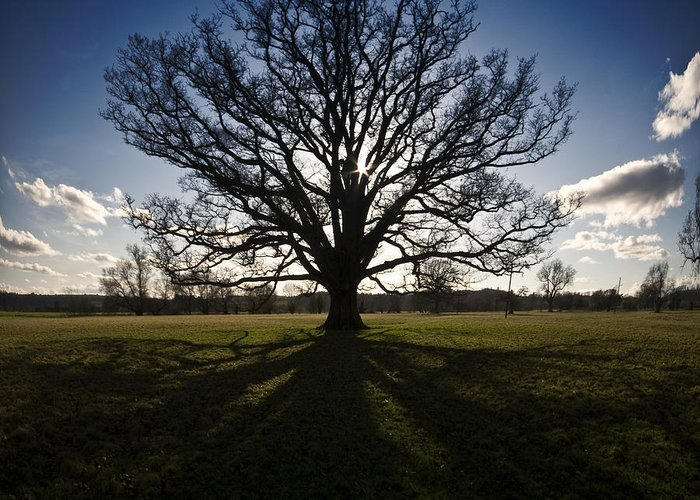 Oak Greeting Card featuring the photograph The Lonely Tree by Angel Ciesniarska