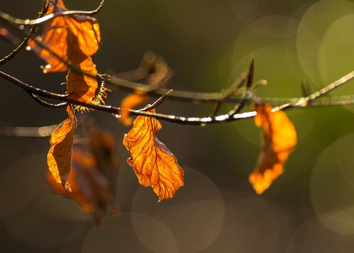 Bokeh Greeting Card featuring the photograph Twigs by Jacek Tomczak