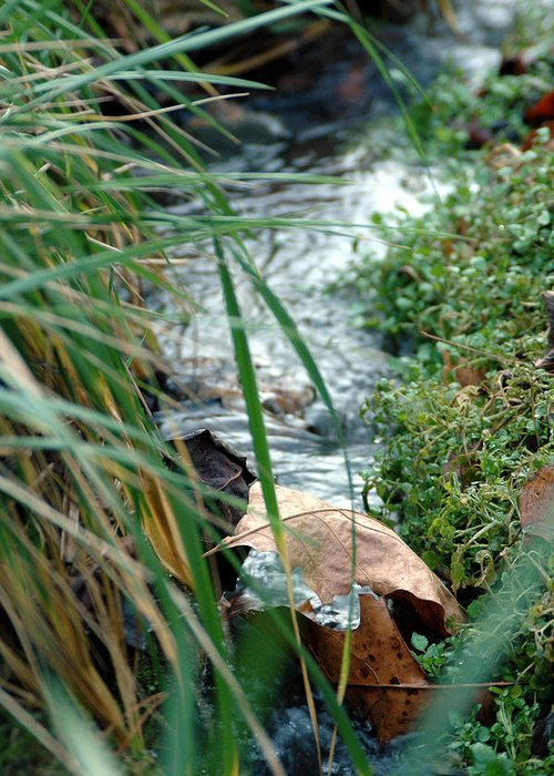 Stream Greeting Card featuring the photograph Untitled by Kathy Schumann