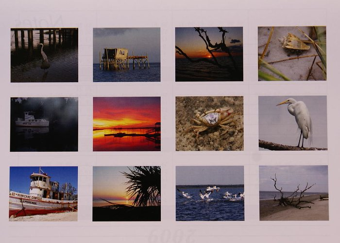 Florida Greeting Card featuring the photograph 2008 Calendar Back Of Gulf Views Edition by Debbie May