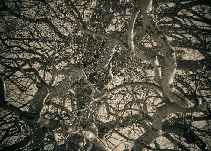 Tree Greeting Card featuring the photograph 2015 Imaginario 04 by Roberto Ferrero