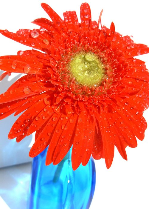 Gerbera Photographs Greeting Card featuring the photograph 2044a by Kimberlie Gerner