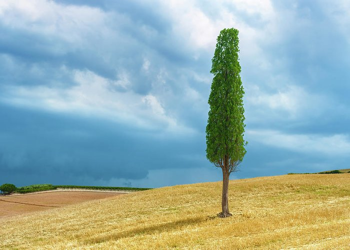 Tree Greeting Card featuring the photograph Tuscany Italy by Peter Horvath