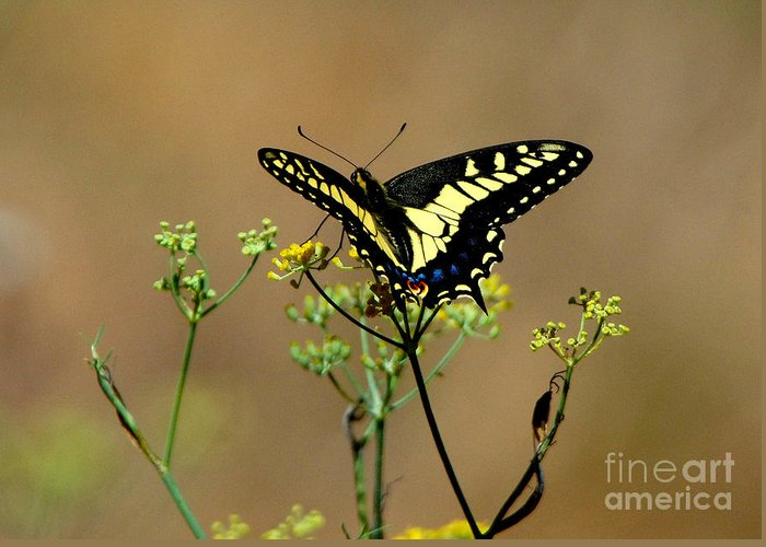 Butterfly Greeting Card featuring the photograph Butterfly by Marc Bittan