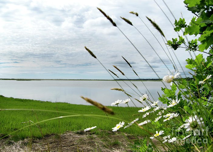Cape Cod Greeting Card featuring the photograph Cape Cod Salt Pond by Michelle Himes