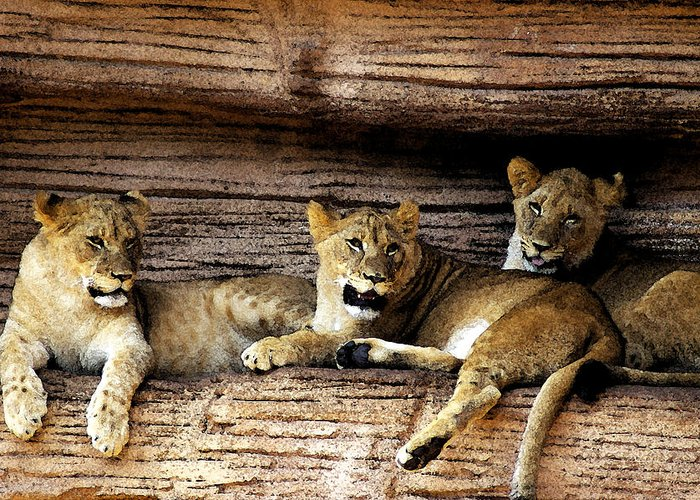 Lion Greeting Card featuring the digital art 3 Cubs by Don Prioleau
