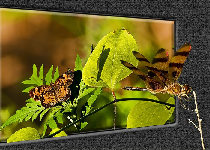 Digital Art Greeting Card featuring the photograph 3-d Dragonfly by Michael Whitaker